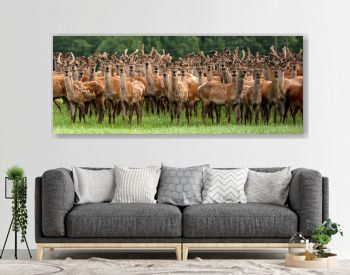 An entire herd of deers staring as though they have never seen a human before.