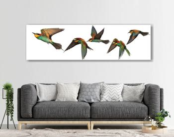 Set of exotic birds on white backgrounds