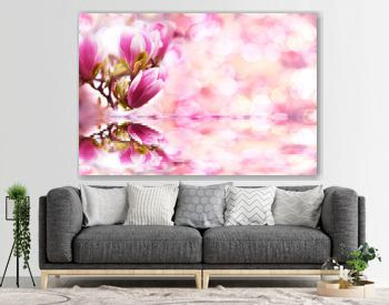 blue sky magnolia flowers look like pink and white Chinese lanterns with reflection in water