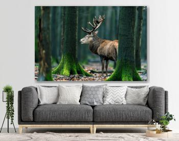 Solitary red deer stag standing between mossy tree trunks in forest.
