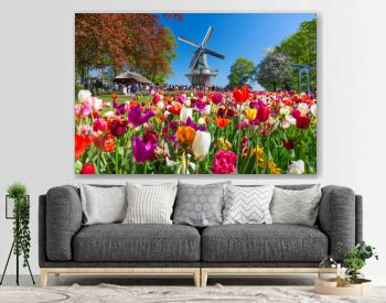 Blooming colorful tulips flowerbed in public flower garden with windmill. Popular tourist site. Lisse, Holland, Netherlands.