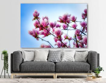 Spring background with magnolias