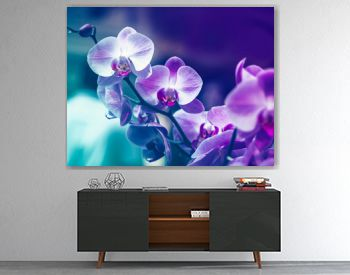 Orchid flower in winter or spring day tropical garden background in Thailand. Use for postcard beauty and agriculture idea concept design