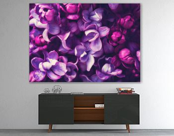 Purple lilac flowers blossom in garden, spring background