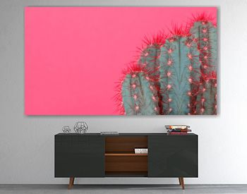 Trendy pastel pink coloured minimal background with cactus plant. Cactus plant close up. Fashion style cacti concept.