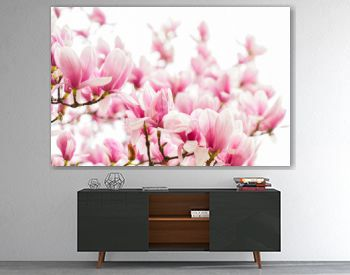 Magnolia flowers. Magnolia flowers background close up. Tender bloom. Floral backdrop. Botanical garden concept. Aroma and fragrance. Spring season. Botany and gardening. Branch of magnolia