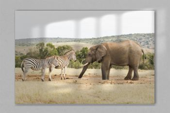 Zebras and an African elephant at a waterhole