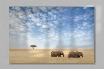 Two elephants walking in the Masai Mara
