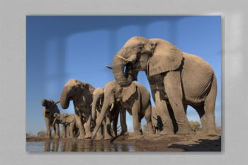 Drinking Elephant Herd