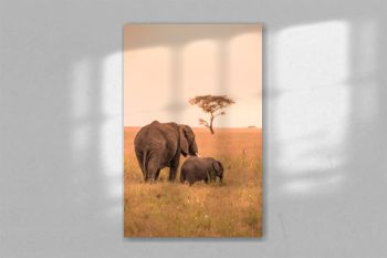 African Elephant Family with young baby Elephant in the savannah at sunset. Acacia trees on the plains in Serengeti National Park, Tanzania. Safari trip in Wildlife scene from Africa nature.