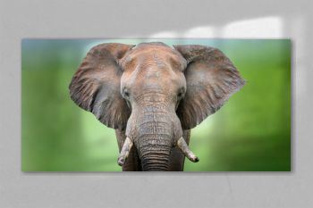 Bull elephant portrait against a blurred green background in the Kruger National Park South Africa