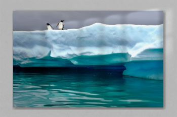 Penguins perched on iceberg near Cuverville Island, Antarctica