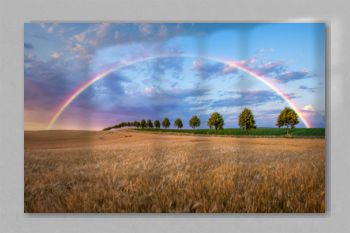 rainbow during sunset over a field of mature cereal