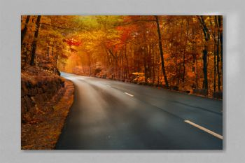 Road in the autumn. Asphalting of the road, turn to yellow, orange autumn forest. Beautiful autumn in the national park. USA. Maine. Acadia Park.