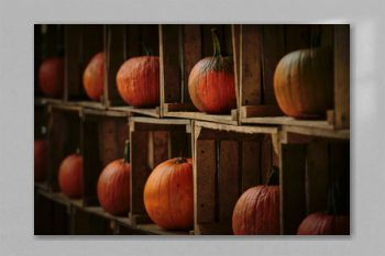 Rustic autumn still life with orange pumpkins.
