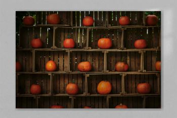 Orange pumpkins in wooden boxes. Autumn pumpkins still life on vintage wooden rustic background