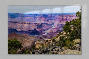 Eastern Grand Canyon, viewed from the South Rim. Rocks and pine trees on the canyon's edge, with the Colorado River below, surrounded by brightly colored rock formations.
