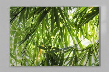Bamboo leaves in the forest.