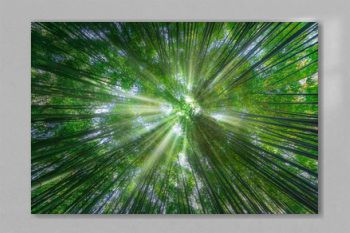 nature background of bamboo forest with sun rays