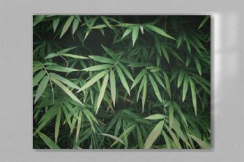 Fresh green bamboo leaves at tropical rain forest.