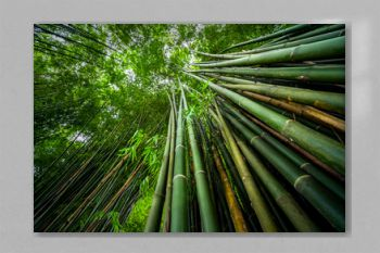 Green bamboo in the forest nature background.