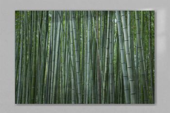 Bamboo forest at Kyoto, Japan