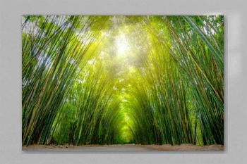 Asia Thailand, at the bamboo forest and tunnel vision, green bamboo forest background