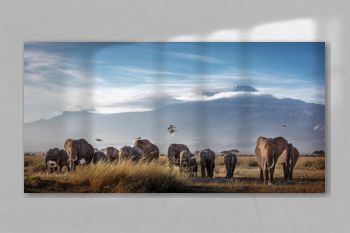 Large Herd of African Elephants in Front of Kilimanjaro