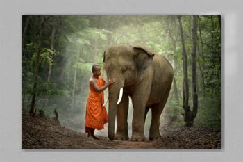 Buddhist monk with elephant in forest, Cambodia