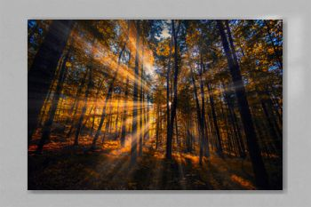 beautiful sun rays in autumn morning forest