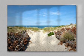 Empty footpath to the sea in sandy dunes in bright summer day, natural beach landscape