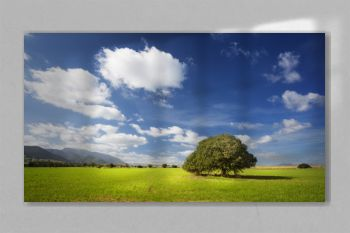 Green field with lonely tree and blue sky
