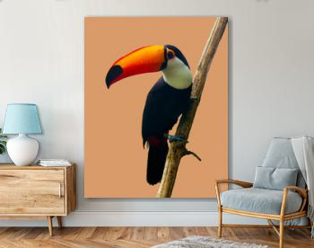 The Toucan Toco sitting on a branch isolated on peach. The toco toucan (Ramphastos toco), also known as the common toucan,